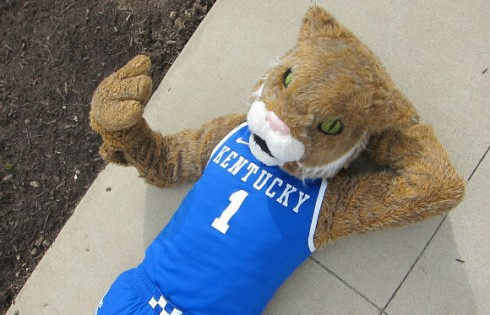kentucky-wildcat.Megan_Robertson.flickr