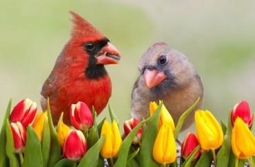 cardinals-shutterstock
